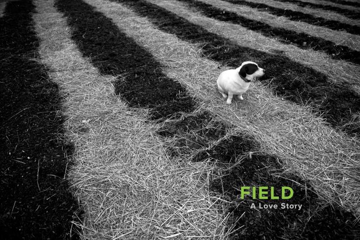 001_Field_001