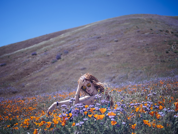 Antelope Valley Flower Fields