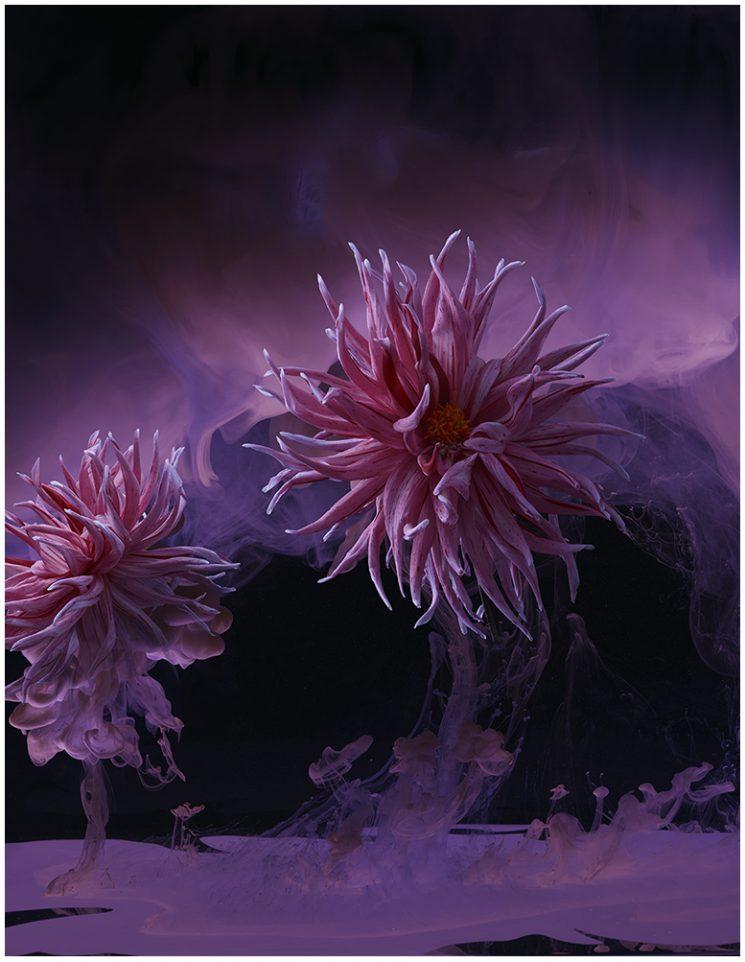 Fulvio Bonavia_flowers 4
